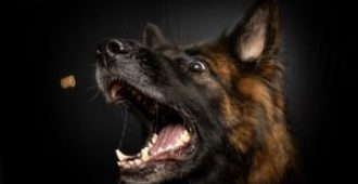 How Long Does It Take To Train A German Shepherd: 6 Steps to Speedy Success