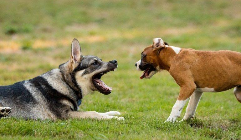 How to Discipline a German Shepherd Puppy (11 Positive Tips)