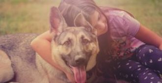 How to Take Care of a German Shepherd Puppy (Essential Owner's Guide)