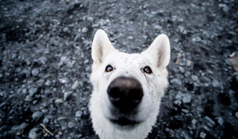 13 Fun German Shepherd Activities You Must Try